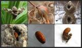 Galls on plants
