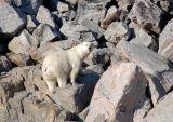 Polar bear on Monumental Island