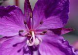 Flower 2 closeup