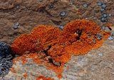 Lichen growth