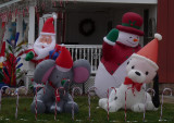 They are quite adorable-this was right across the street from the Independence PL