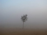 fog tree and sand.jpg