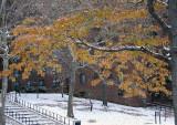 snowy foliage.jpg