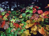 atera undergrowth foliage.jpg