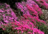 flower bank.jpg