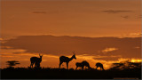 Antelope at Sunset in Tanzania