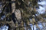 Partnership for International Birding