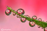 Best of drops