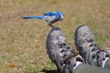 shoe-inspection