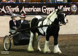 The Cobb version of the Gypsy Vanner