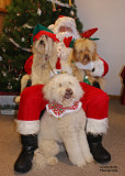 Santa and His Labordoodles