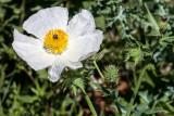 Texas Roadside Wildflowers - 2013