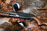 Winchester Model 12 16 Gauge Field Grade and Pheasant