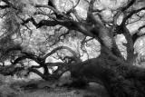 los osos oak preserve, los osos, california