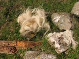 1st September Wool