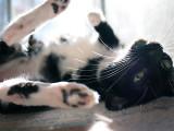 Dizzy loves a sunbeam!