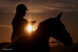 Horses/Konji