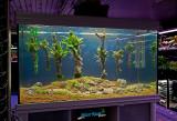 Live Aquascaping 29-12-2012 (Koelle-Zoo Karlsruhe)