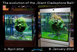 Giant Cladophora Ball by Oliver Knott
