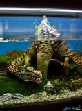 The Art of the Planted Aquarium 2013 / 25.-27.01.2013