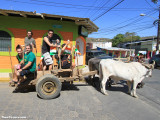 St. Patrick's Day Ox Cart Pub Crawl 2013