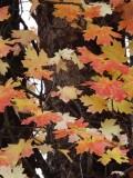 Harkness Canyon Autumn