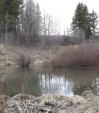 Beaver Pond, Buckskin Road