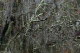 Swampscapes 2009-Present