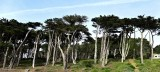Cypress Trees-1.jpg