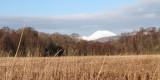 Ben Lomond from the Aber Bog, Loch Lomond NNR