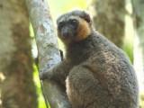 Madagascar - Lemurs