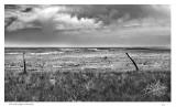 Windswept Kansas