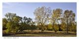 Dyke Arboretum Hesston KS
