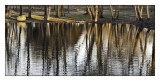 Trees reflected, Andover Lake