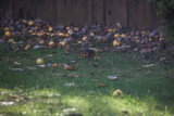 Critters in the Yard, Nov 26 2012