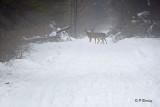 Jack Pine Ski Trails