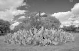 San Juan Mission Cactus Cross
