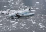 polarbeariceberg.jpg