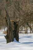 Minnesota Wildlife Refuge