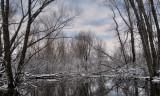 Floodplain Along The Vermillion River Trout Stream