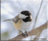 Chickadee Gallery