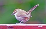 yard_birds_spring_2013