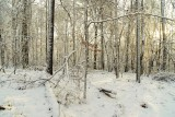 woods in snow 2 copy.jpg
