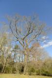 tree in winter copy.jpg