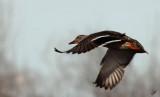 2013_04_27 Spring Birdwatch at Big Lake
