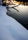Otter tracks. _MG_4926.jpg