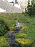 IMG_0342moss lined creek.JPG