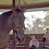Champion race horse, Da Hoss