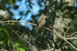 Grand Isle Bird Migration 2013