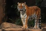big_wildlife